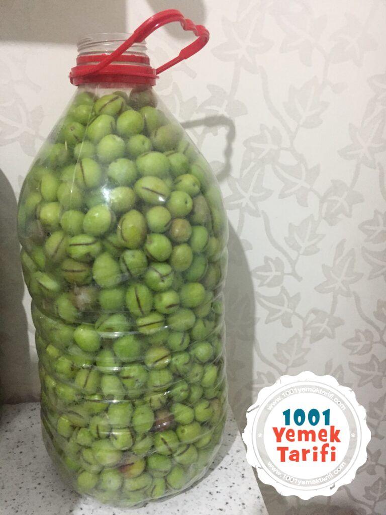 yeşil zeytin yapımı-ev yapımı kolay zeytin nasıl yapılır tarifi-1001yemektarifi